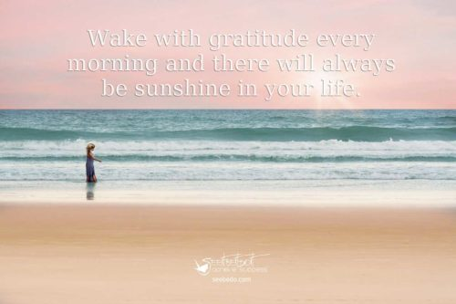 gratitude and sunshine